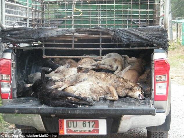 1414506414830_wps_15_Dead_dogs_piled_in_the_ba