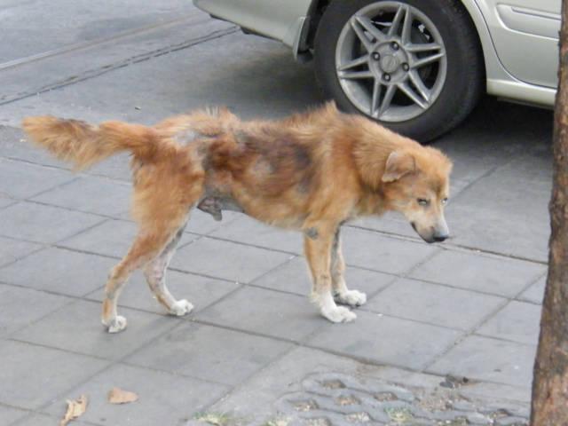 207-494-eat-this-thai-dog